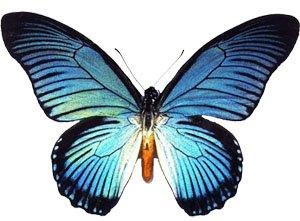 Gameday Butterflies